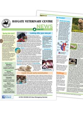 haygate-newsletter-spring2021