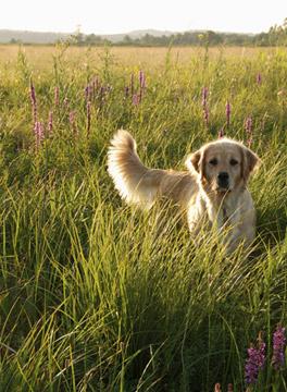 Dog running in the grass